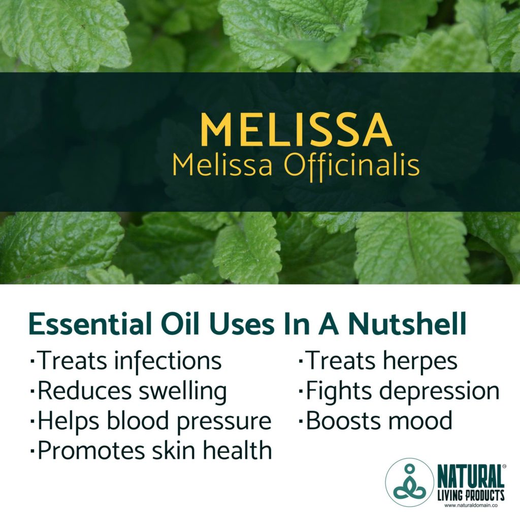 Essential Oil Uses In A Nutshell – Melissa (Melissa Officinalis)